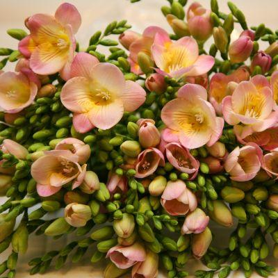 http://ourflowers.ucoz.ru/_bl/2/35565.jpg