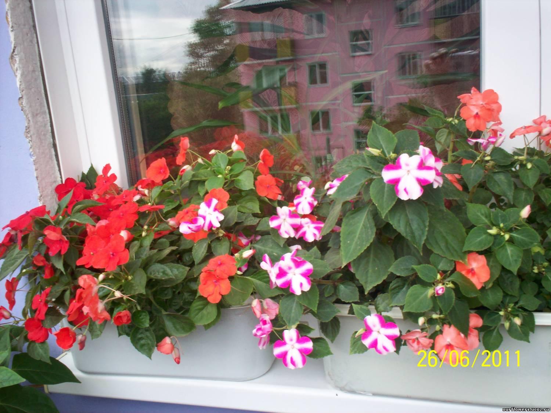 Цветы на балконе. какие посадить? все о цветнике и балконных.