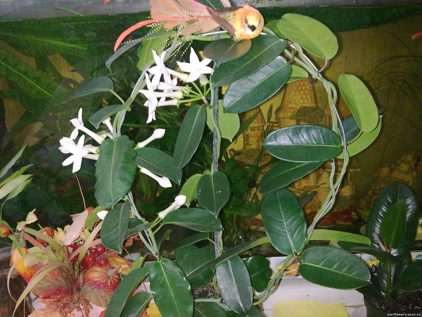 Фотография 1 25 02 2012 что это erikzair 1616 0 3 6
