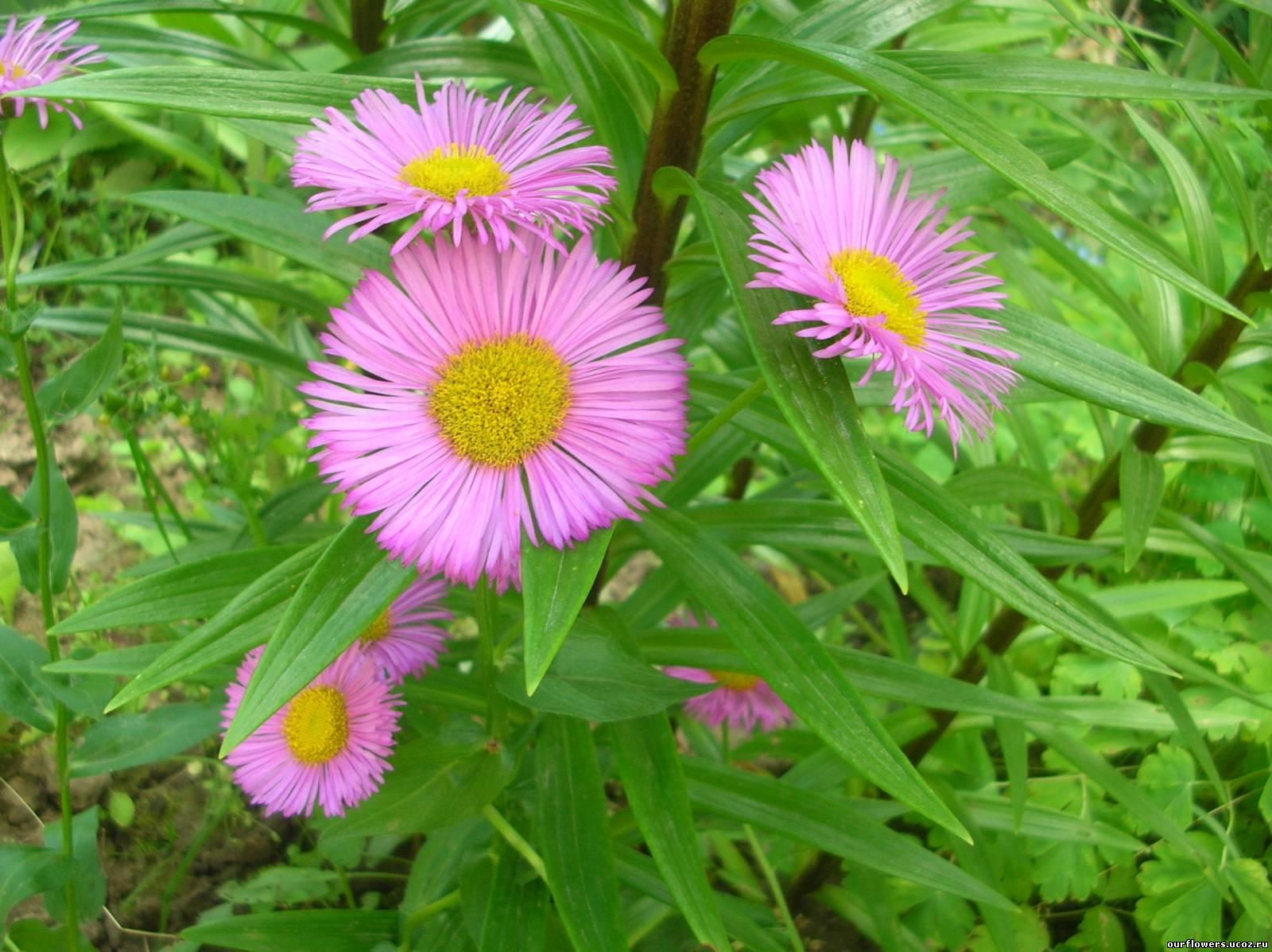 растения картинки: